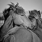 The Summer of Icelandic Horses by psychopu