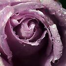 Blue Rose - Drouin, Gippsland Australia by Bev Pascoe