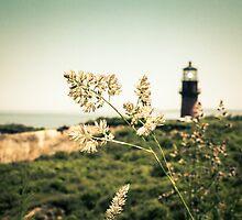 Gay Head Lighthouse, Aquinnah, Martha's Vineyard by Elizabeth Thomas