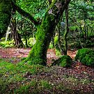Natural Emeralds II. Wicklow. Ireland by JennyRainbow