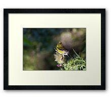 Singing to the Gods Framed Print