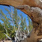 Curvy Driftwood... by 242Digital
