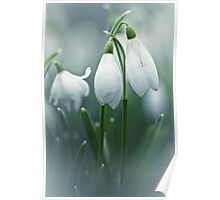 Silky Snowdrops Poster