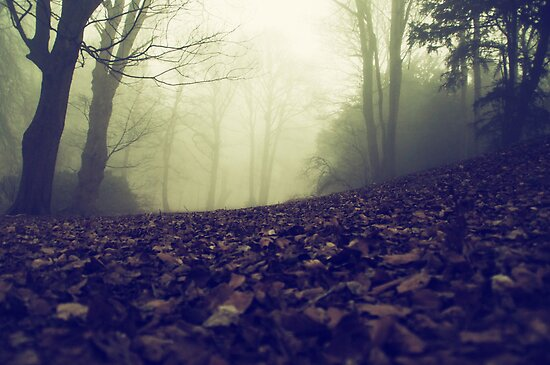 Foggy Morning 1 by riotphoto