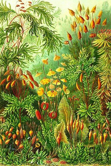 Muscinae by Jenn Kellar