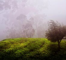 Ghost Tree in the Haunted Forest. Nuwara Eliya. Sri Lanka by JennyRainbow