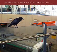 Never Know Your Lucky Crow by Robert Phillips