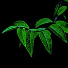 Green leaves by Nadeesha Jayamanne