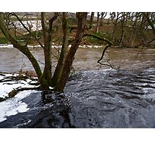 Drowning Tree Photographic Print