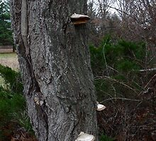Trees with Mushrooms by TCbyT