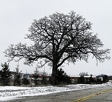 Tree on my Journey Home by TCbyT