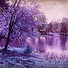 Lavender Landscape 1 - Franklin NJ, USA by Jane Neill-Hancock