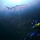 Grey nurse shark with scuba diver by Emma M Birdsey