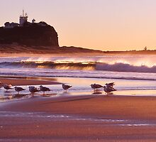 Sunrise at Nobbys Beach by Emily Freeman Photography