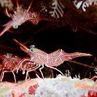 Hinge back shrimps  by Emma M Birdsey