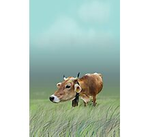 Milk cow in the field Photographic Print