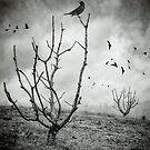 Untitled by Carlos Restrepo