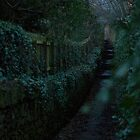 Path in Killiney, IE by RickJacobsAPC