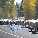 "Whadda ya mean you want to go back…..can't you read the sign????  It says 'No Ewe Turn"" ! by Susan Littlefield"