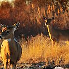 Two Deer by RogerEchauri