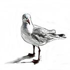 Altona Gull by urbanmonk