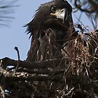Jordan Lake Eaglet by Denise Worden