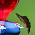 Hummingbird at Feeder by karineverhart