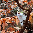 Cat Exploring the Winter Woods II by karineverhart