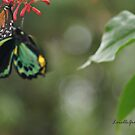 Fluttering Beauty by Lorelle Gromus