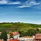 The Vineyards by Stephen Cullum