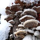 Cotton Snowshrooms by PierPhotography