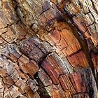 Wood Mosaic by PierPhotography