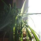 Plant in front of Kitchen Window by MsSexyBetsy