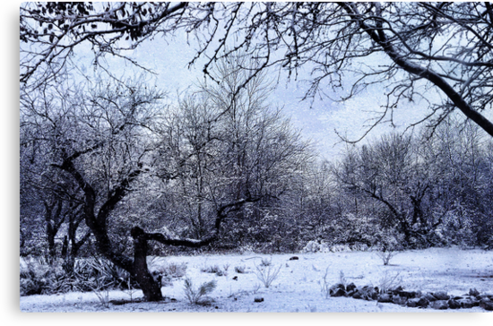 A Winter's Day by Barbara Manis