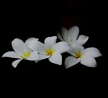 Dance of the Plumeria by InnerSees