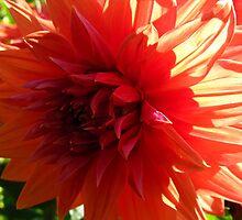 Delicious Dahlias by MarianBendeth