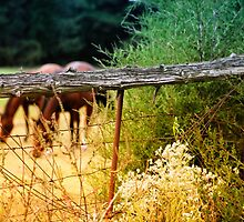 *Grazing* by DeeZ (D L Honeycutt)