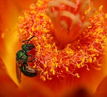 Green Sweat Bee by InnerSees