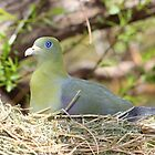African Green Pidgeon by InnerSees
