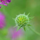 Flower bud, Sussex England by Emma M Birdsey