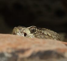Enemy Fire - Black Tailed Rattlesnake by InnerSees