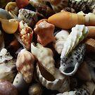 Sea Gems by debsphotos