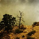 Two Trees, Stormy Weather by CarolM
