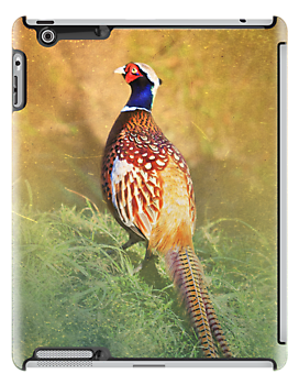 Male Pheasant iPad Case by Carol Bleasdale