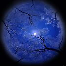 Moonlight Night by Igor Zenin