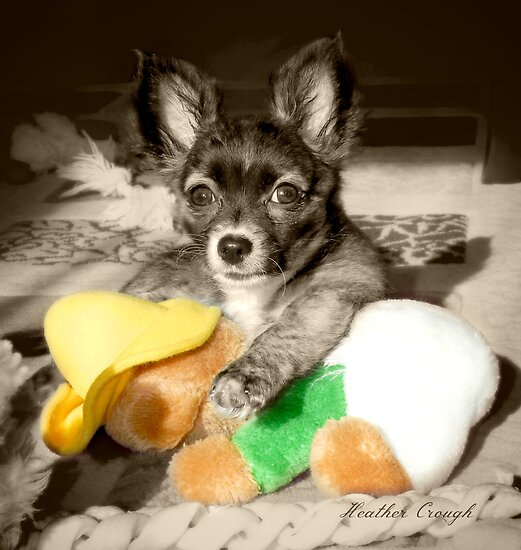 A dog and her toy by Heather Crough