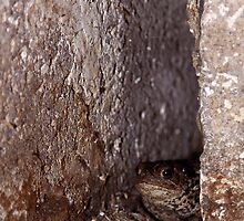 Toad in the Hole by Brian Avery