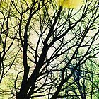Tree Branches by salwanajm