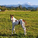 Paint Colt and Mount Rainier by Stacey Lynn Payne