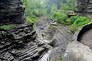 Damp Summer Day In Watkins Glen by Gene Walls